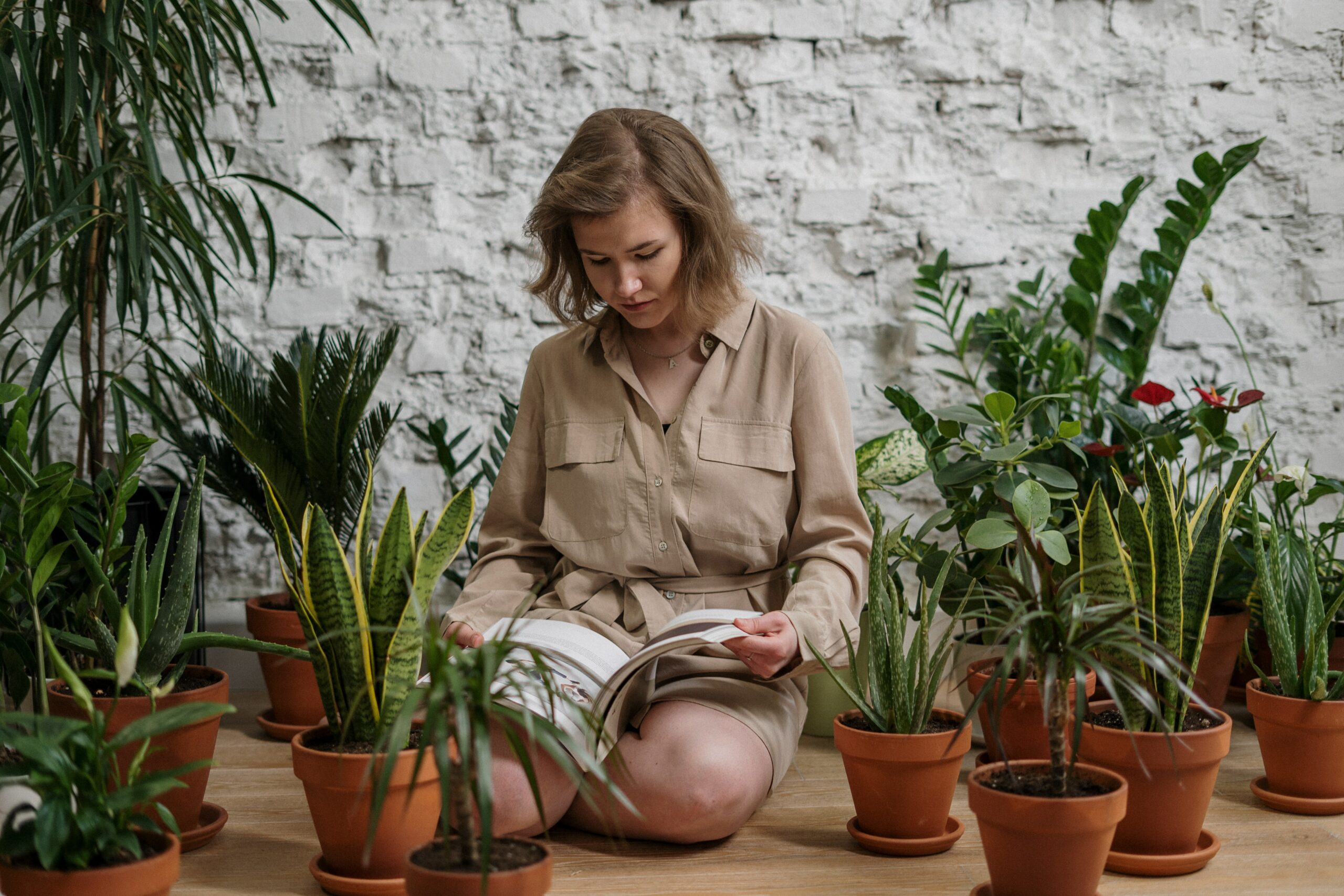 3 tips om je planten te verzorgen